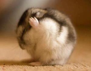 Bone-Hamster