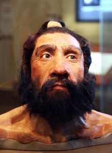 439px-Homo_neanderthalensis_adult_male_-_head_model_-_Smithsonian_Museum_of_Natural_History_-_2012-05-17