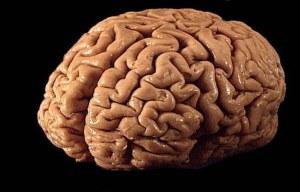 Human_brain_01