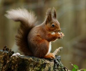 squirrel_posing