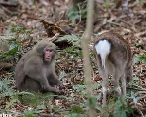 monkeydeer