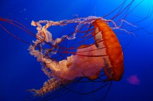 1280px-Jelly_Fish_in_Ocean_Park