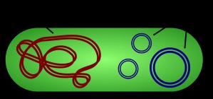 1280px-Plasmid_(english).svg