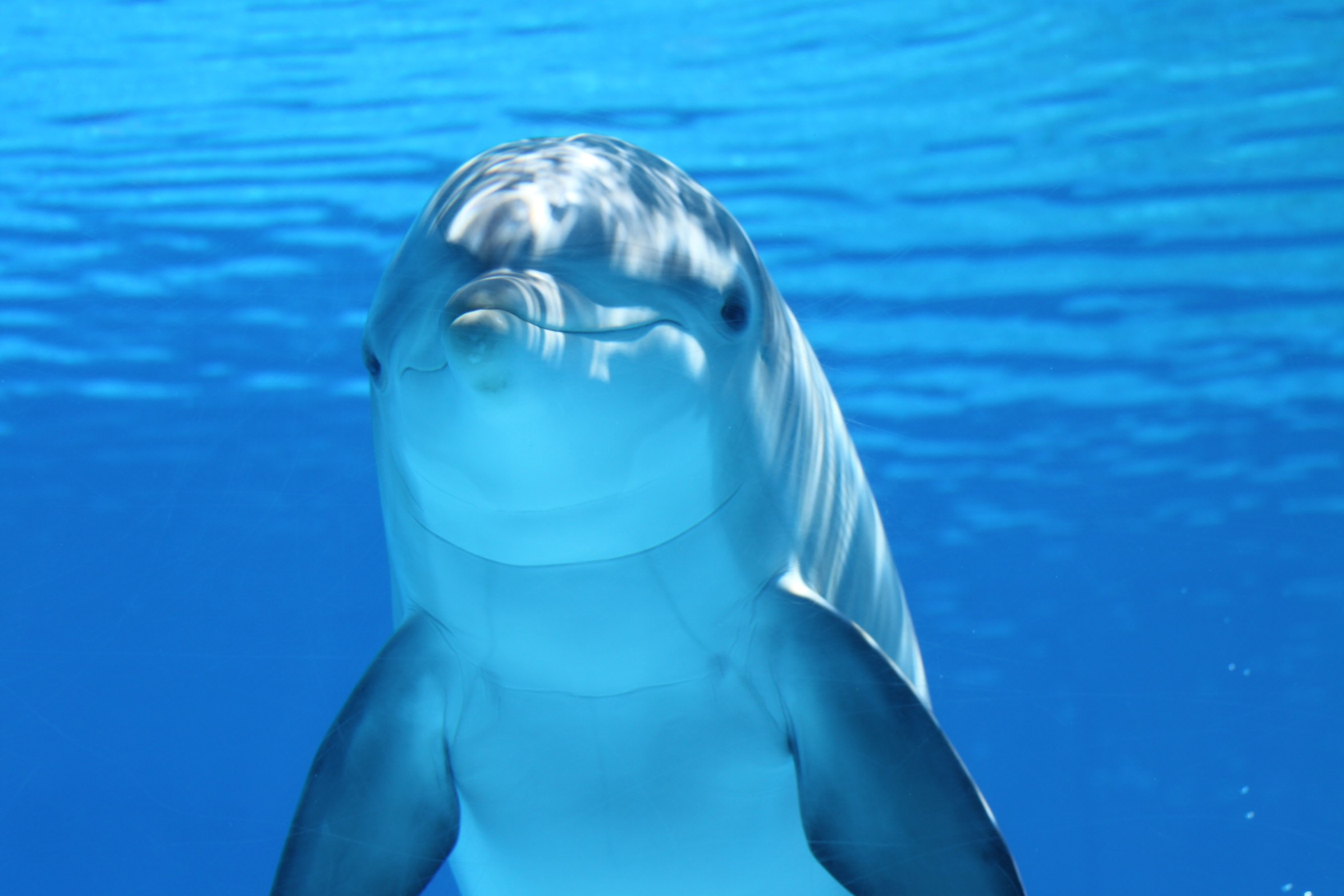 dolphin-marine-mammals-water-sea-64219.jpeg