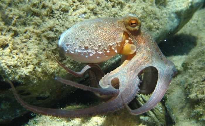 On octopus art.