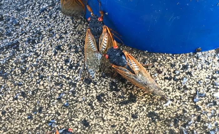 On cicadas andperception.